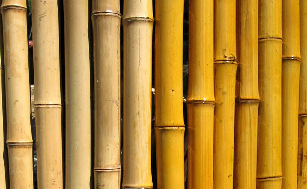 antorchas de Bambu