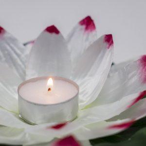 velas-piscina-flores-nenúfar